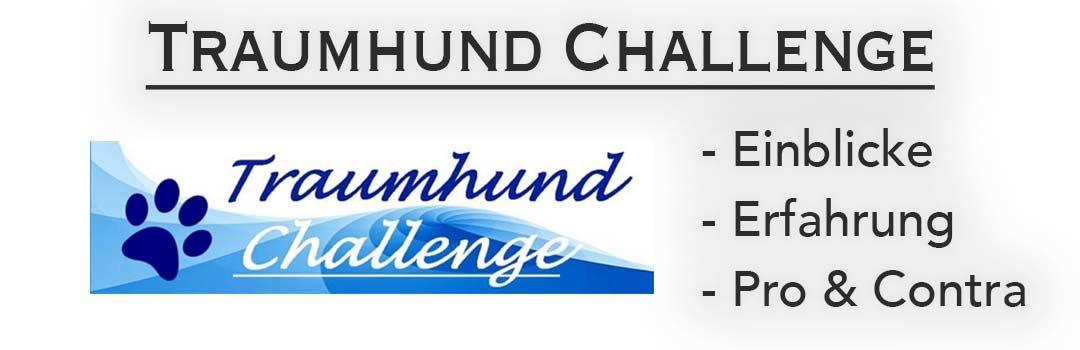 Test- & Erfahrungsbericht zur Traumhund Challenge
